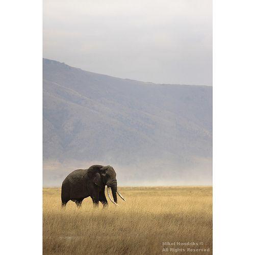 Solitary Bull Elephant