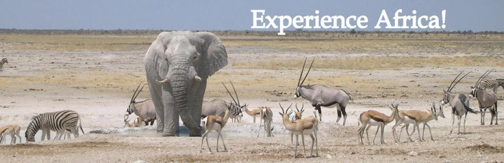 Few places has the wildlife diversity such as the Etosha National Park in Namibia. Will always be my second home!