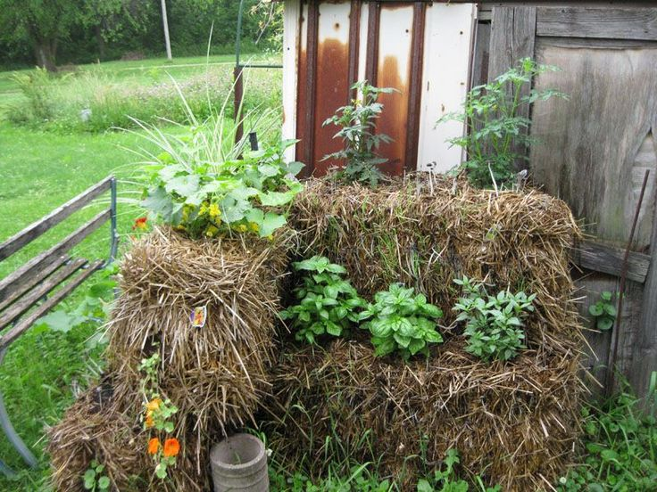 Best 10 Straw Bales Ideas On Pinterest Straw Bale Gardening Bales Of Straw And Hay Bale