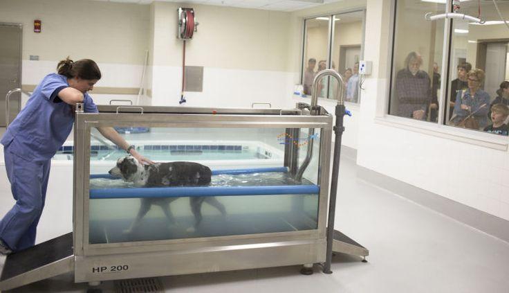 Auburn Small Animal Hospital 02