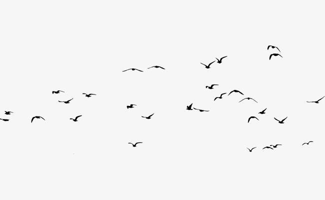 مجموعة طيور السماء Calligraphy