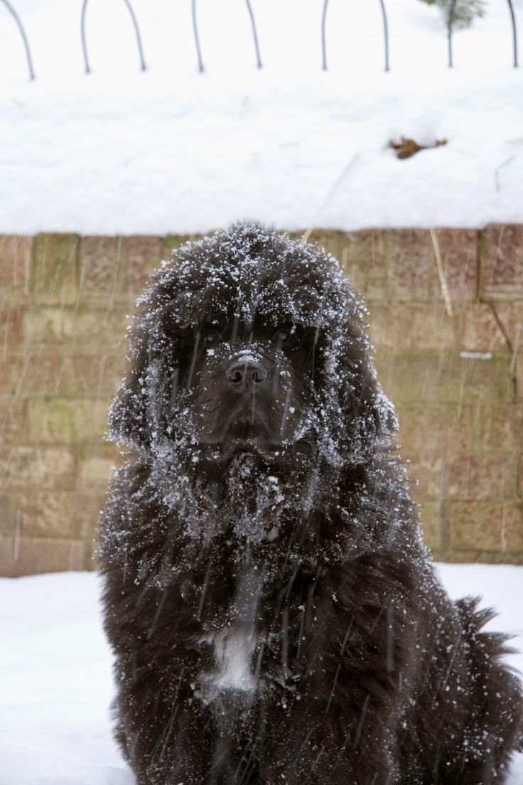 PHOTOS: The top 10 cold weather dog breeds for a family ...