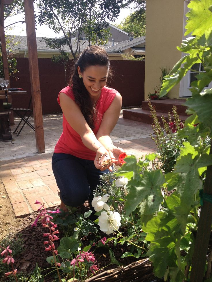 Add Lady Bugs To Your Garden To Help Control Aphids #ihatemyyard  #sarabendrick #diynetwork