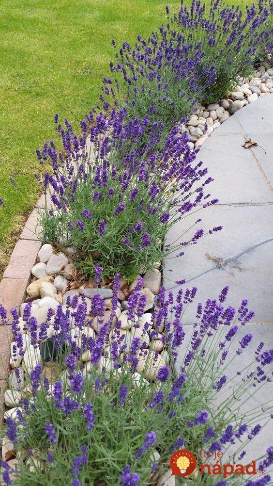 Erstaunliche Ideen, wie man Lavendel im Garten pflanzen kann, um ihn hervorzuheb…