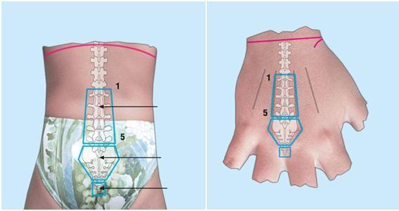su jok | Foot reflexology, Reflexology, Color therapy