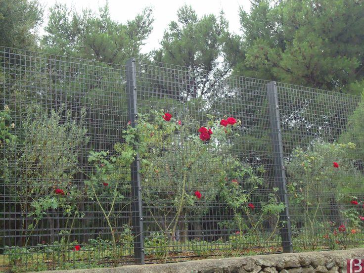 Betafence: Panele ogrodzeniowe Zenturo