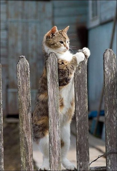 cat waiting at the fence for his friend.