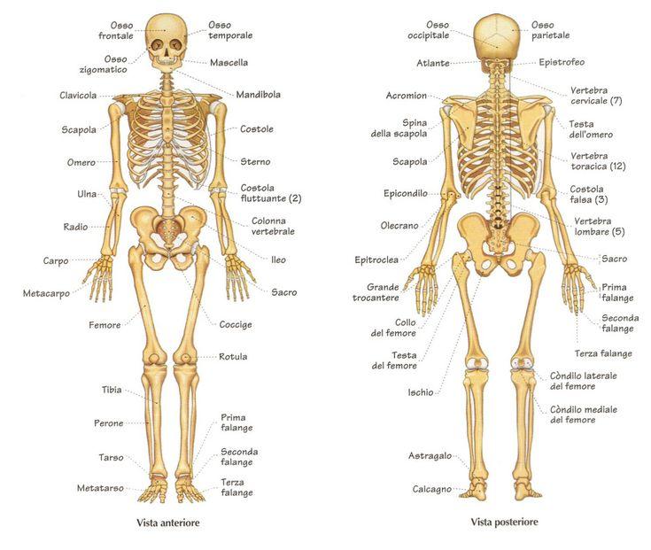 """Ecografia muscolo-scheletrica come """"memento audere semper"""""""