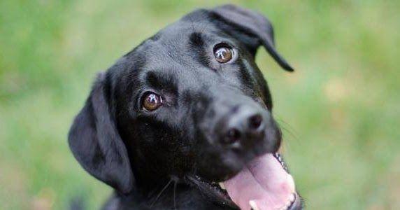 تفسير حلم الكلاب السوداء بالتفصيل والكلاب هي واحدة من أنواع الحيوانات ويمكن أن يرافقه البشر وأنواع الحيوانات الأليفة المقترحة بما Black Dog Dogs White Dogs