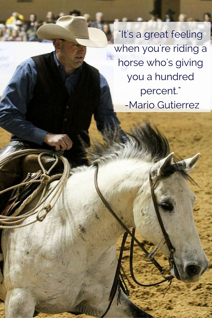Pics photos quote i wrote for my horse com account s equestrian - Horse Quotes It S A Great Feeling When You Re Riding A Horse Who S