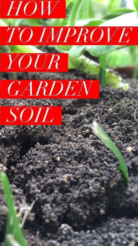 Learn How To Improve Your Garden Soil For A More Productive
