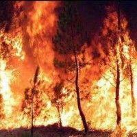 """Anziano, incolto e dà fuoco per interesse Ecco il """"reazionario rurale"""" che incendia l'Italia"""