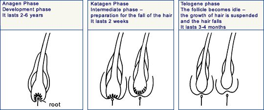 www.kord.gr Информация о жизненном цикле роста волос: фазе анагена (anagen), катагена (catagen) и телогена (telogen): http://bit.ly/1lZk6Uv