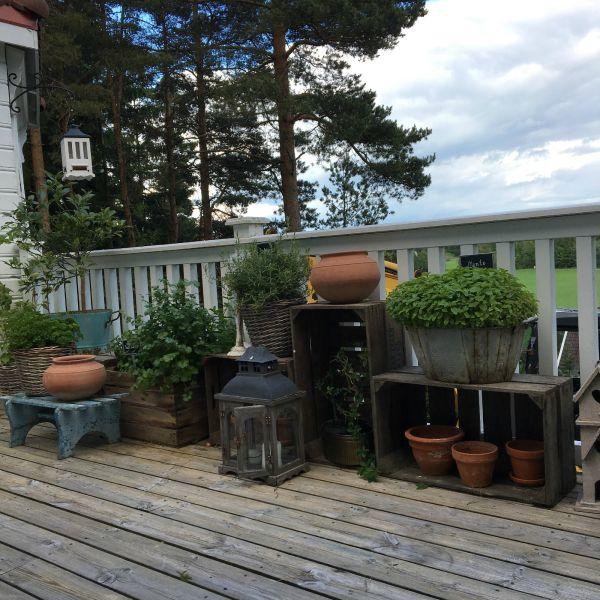kjøkkenhage på terrassen - hage - kitchengarden