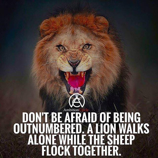 Lion Sheep Quote: The 25+ Best Walking Alone Quotes Ideas On Pinterest