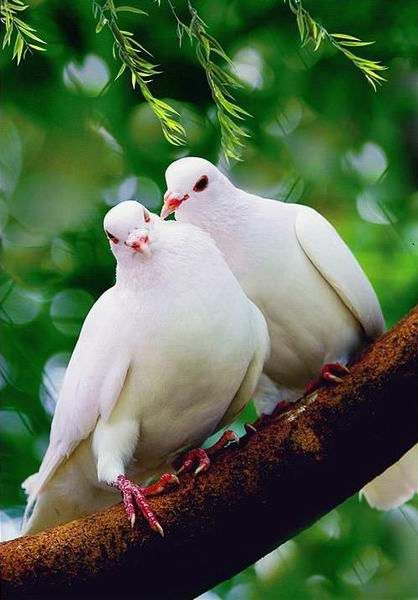 white doves. While I was pregnant with our daughter...I was still suffering from anxiety because we had had a miscarriage. I was staying with my in-laws and there in the window of the bedroom I was sleeping was a momma dove and her two babies. To me...it was beautiful to watch her care for them, and it became my symbol of hope that all would be well. And it was!