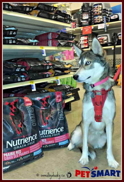 Putting A New Spin On Raw Diets For Dogs #SubZeroDifference