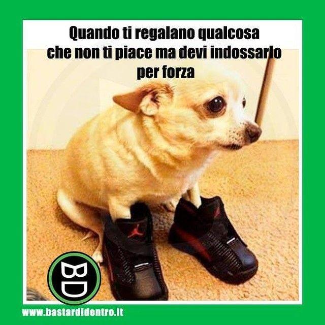 Quante volte ti sei trovato in questa situazione? #bastardidentro #regalo #cane #ipnoticamentebastardidentro www.bastardidentro.it