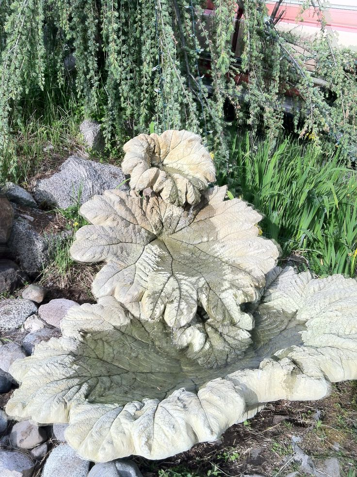 My gunnera-leaf fountain with a real gunnera plant to its right.