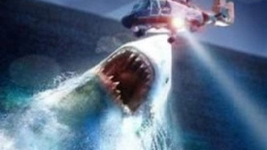 Real Megalodon Sightings!! Megalodons (Biggest Sharks) Exist   Megalodons are World's largest sharks ever! These giant sea monsters didn't go extinct! These mysterious creatures are still alive! You'll believe in megalodons existence after this video cause you'll see real megalodon evidence. The enormous beings still lurk in the ocean ...and it's really scary..because these sharks are abnormally large ... and actually no other shark is so huge even great whites or whale sharks... megalodon…
