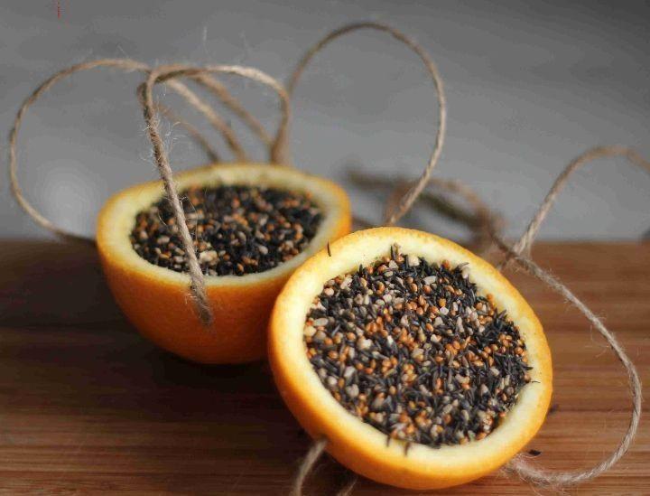 mangeoire oiseaux en moitiés d'oranges pleines de grains