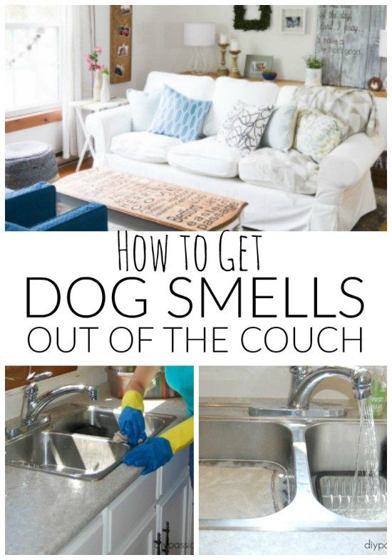 How to Get Dog Smells out of the Couch! A non-toxic cleaning solution for dog lovers.