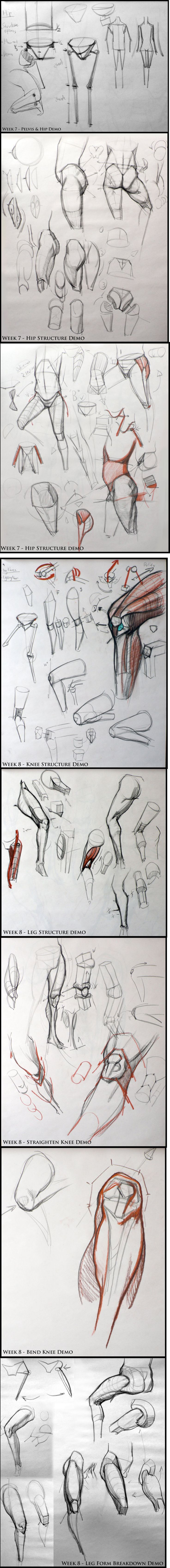 Pelvis & hip structure / Leg & knee - analyticalfiguresp08.blogspot - Kevin Chen #analytical #drawing #figureDrawing #instructorDemo #structure