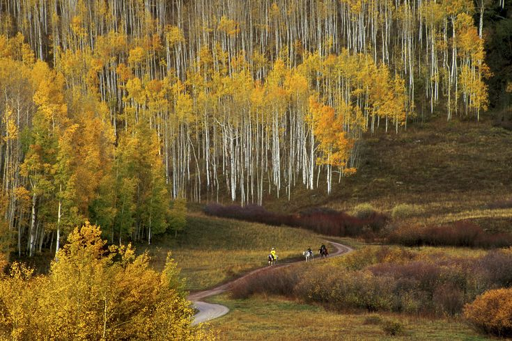 Best Hikes For Colorado Fall Colors Kebler Pass Area Of