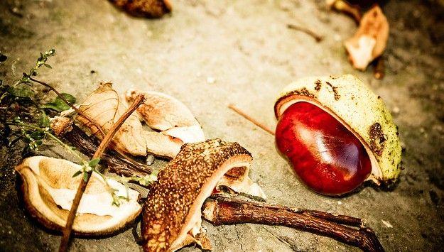 El otoño significa, para muchos, el comienzo de un nuevo ciclo. Después de los rigores del calor veraniego, la llegada de las lluvias, de la humedad, y del frío, provocan un renacer en la naturaleza del que los seres humanos parecemos participar por cuestiones biológicas y culturales.  El otoño significa la …