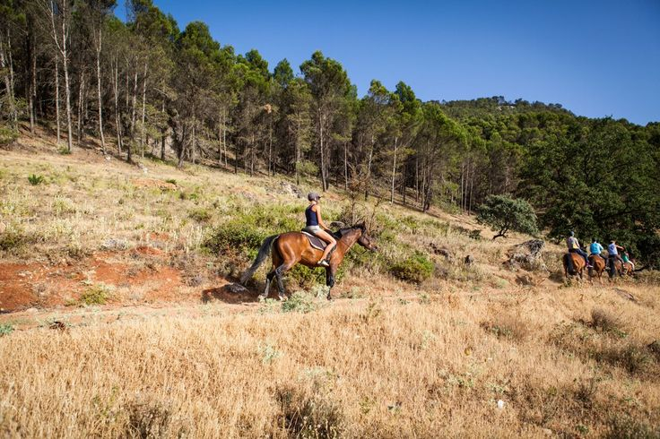 bareback gallop past pine trees