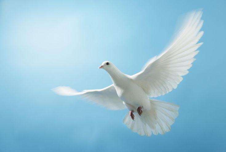 39 Best Holy Spirit Dove Images On Pinterest Holy Spirit Holy