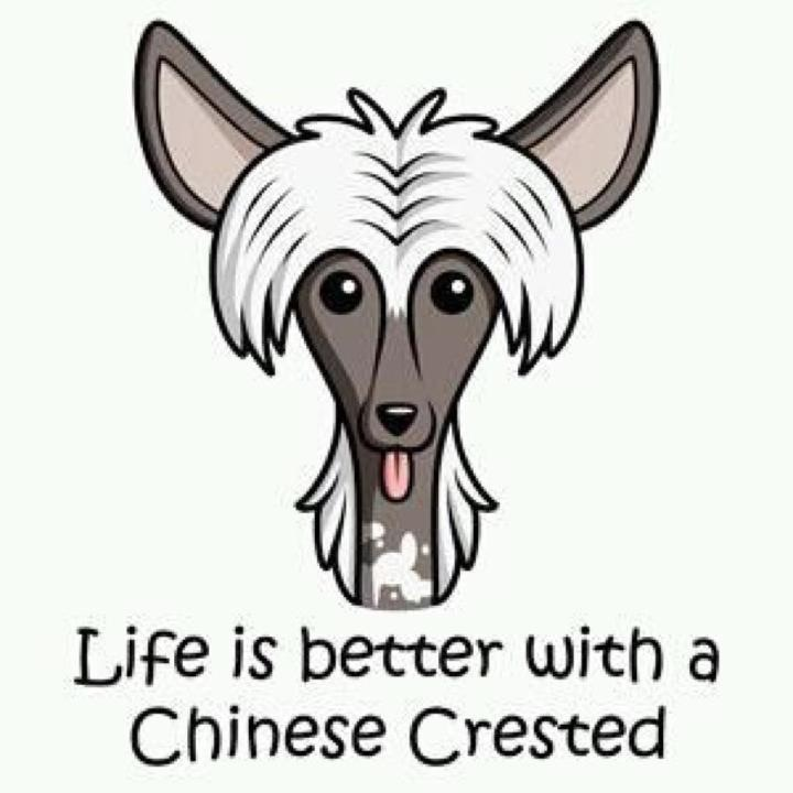 Life's better with a Chinese Crested!
