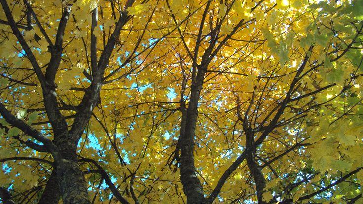 #Alberi in #autunno in #ValdiLedro #Trentino