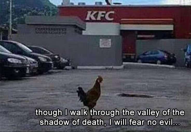 Best 25 Funny Chicken Pictures Ideas On Pinterest: Best 25+ Funny Bible Verses Ideas On Pinterest