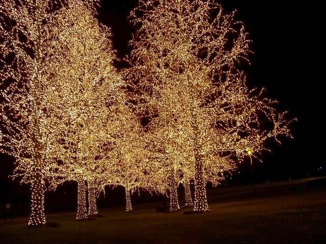 25 Trending Opryland Hotel Christmas Ideas On Pinterest