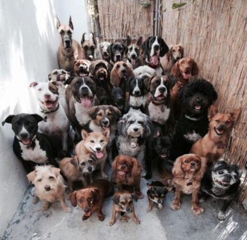 de honden bijeenkomst