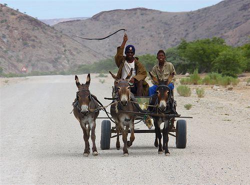 Donkey and cart, Damarland