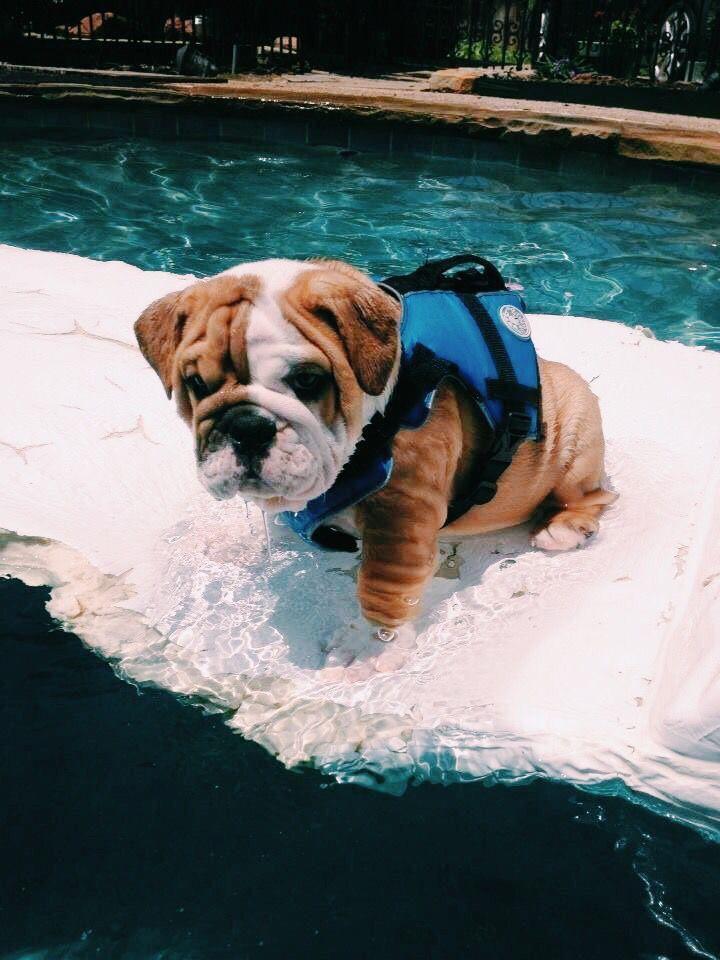 Pin Insta Lexievicchio Cute Baby Animals Bulldog Breeds