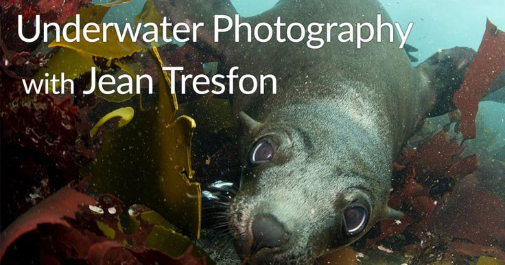 Underwater Photography | We join award winning photographer Jean Tresfon on a day out and find out more about his photography,…