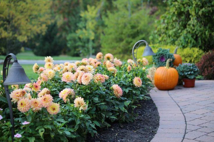 Long Lasting Flowers That Bloom Summer Through Fall