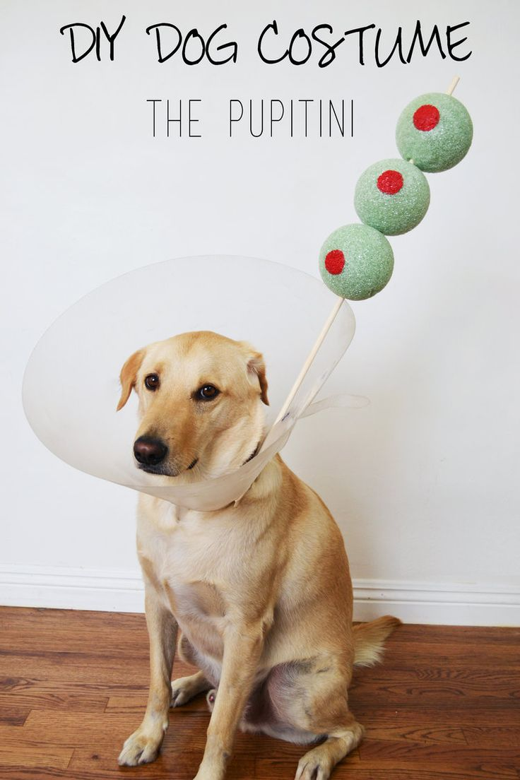 Fullsize Of Homemade Dog Cone