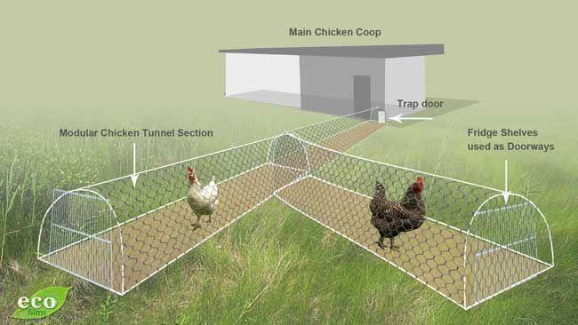 """CHICKEN TUNNELS   Bruce has created a modular system where he links a series of wired chicken """"tunnels"""" together to direct his chickens to areas in his garden that needs some serious work. The chickens go through the tunnels to the weed infested area and over the course of a few weeks, scratch and dig and fertilize the spot and get it ready for his vegetable seedlings…"""