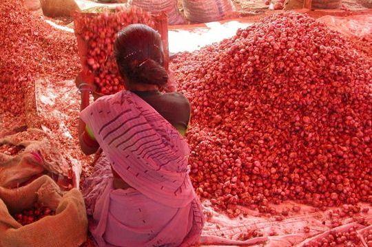 Au début du printemps, en Inde du Sud, des dizaines de kilos de pétales de roses sont récoltés, séchés puis distillés pour obtenir la précieuse huile essentielle de rose.