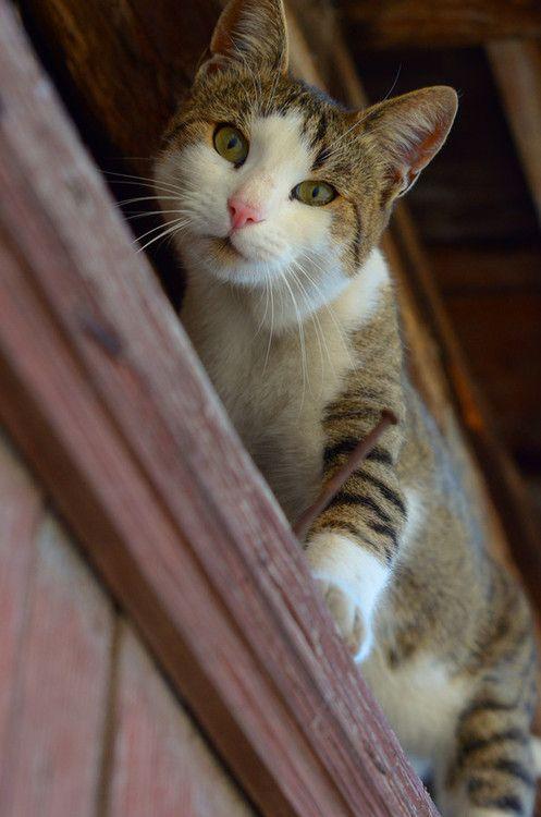 mel-cat:  take me down by hkNhttp://500px.com/photo/49097010