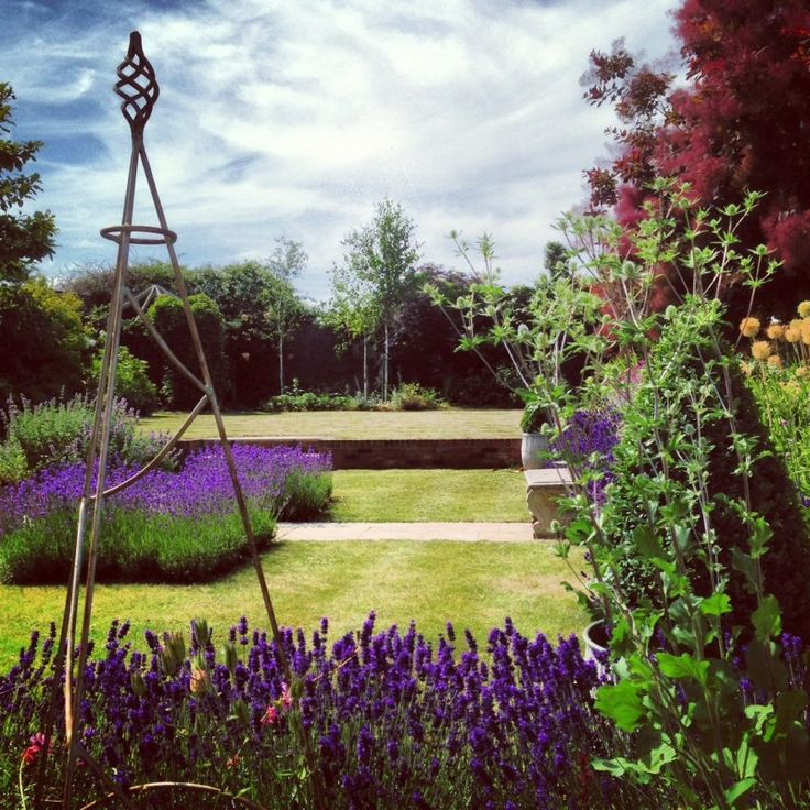The absolutely best way to prune English lavender beautifully