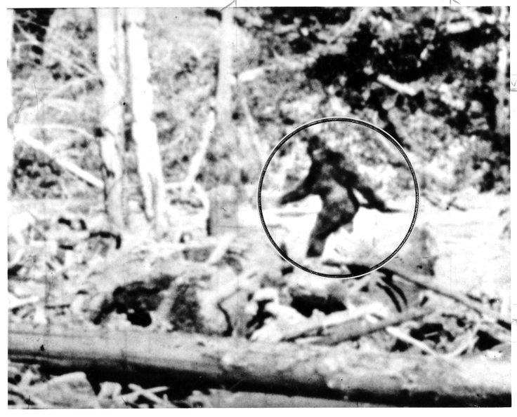 Sasquatch hunter claims he was bullied by Durham police officer -- Tim Marczenko says he was looking for Bigfoot in the bush east of Toronto, not tending to a marijuana plot.