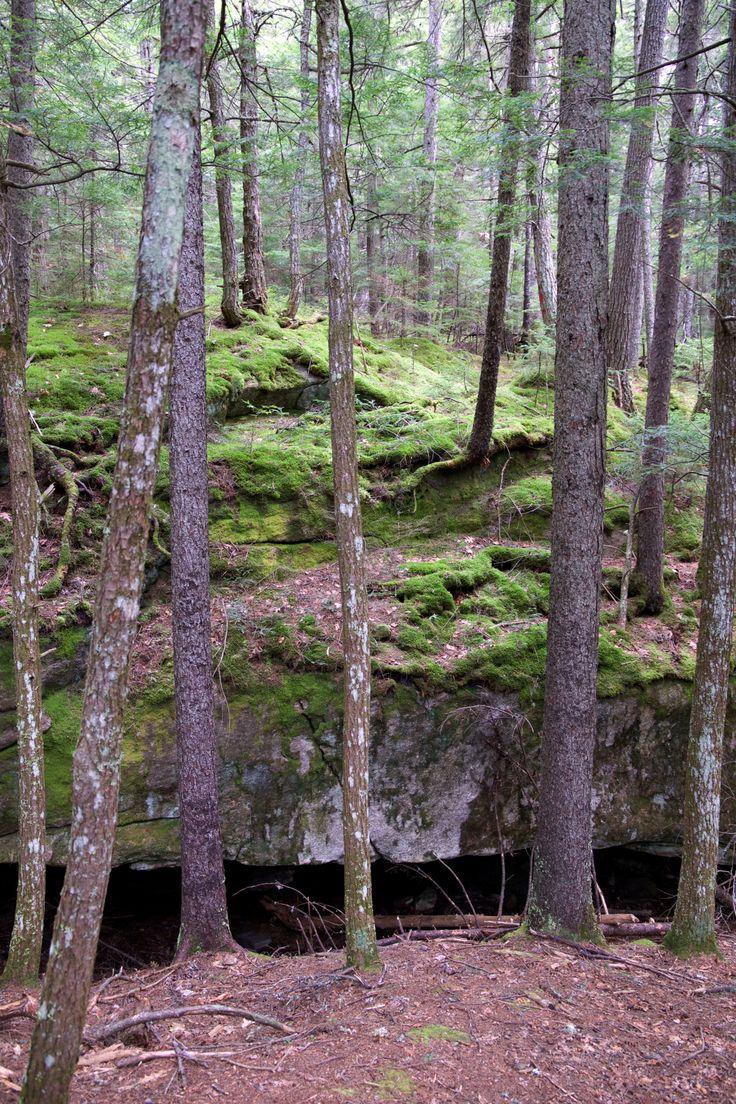 Web con recopilación de fotos de naturaleza (con licencia creative commons)