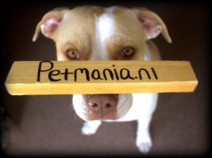 Hé wat ligt er op mijn neus? http://www.petmania.nl de online dierenwinkel, die gek is op DIEREN!