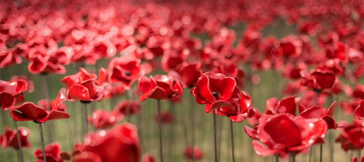 DAF Trucks to support UK exhibition tour of Tower of London Poppies