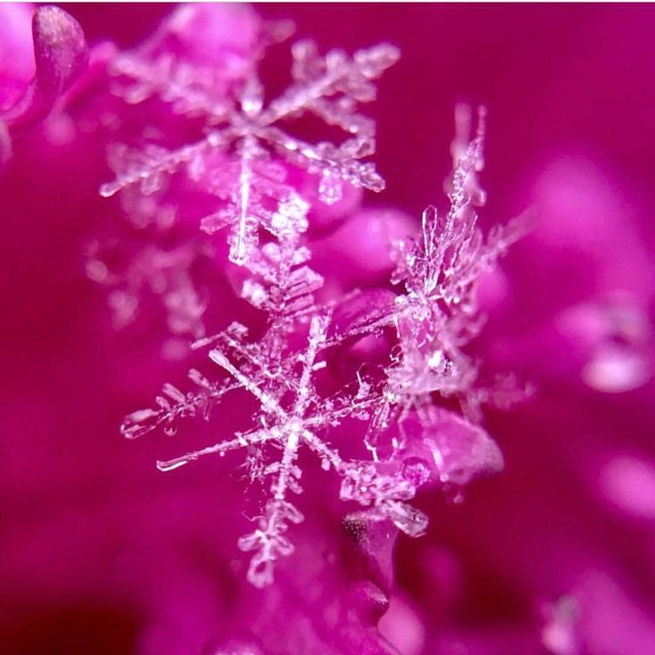 Great tips on how to shoot snowflakes with a smartphone.